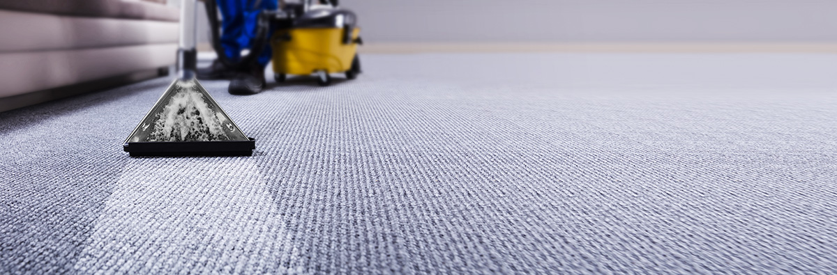 Professional janitor cleaning carpet